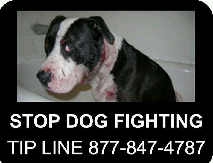 Taking Action to STOP DOGFIGHTING! How to spot the signs and what you can do! PLEASE SHARE WIDELY! Thank you!