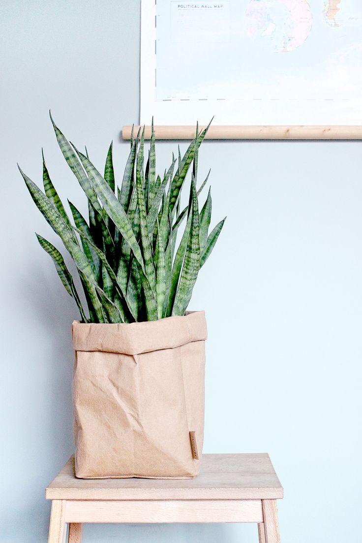 Uashmama - washable paper - paper bags - decoration - interior - sanseveria - plant - landkaart