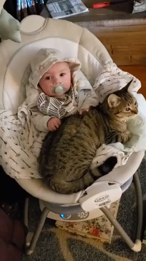 Baby making biscuits on a cat