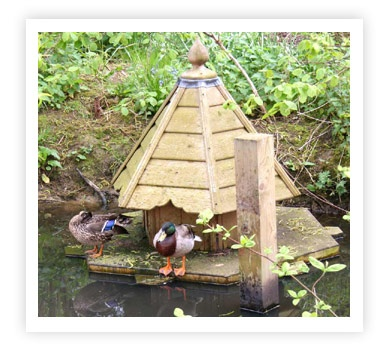 17 best images about duck house on pinterest cold for Duck shelter designs