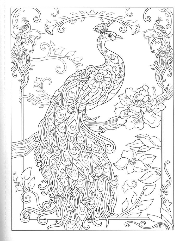 Pin By Margaret Gnewikow On Coloring Pages Peacock Coloring Pages Coloring Books Bird Coloring Pages