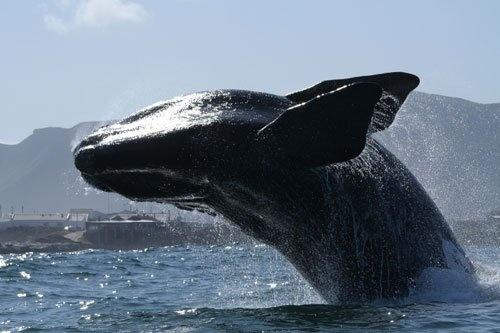 Hermanus, Cape Whale Coast- 40 minutes from Franschhoek and La Clé des Montanges