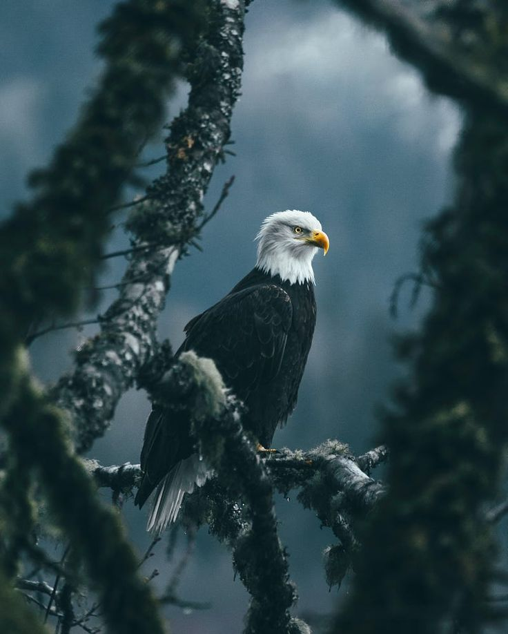 Waiting for the perfect salmon by Dylan Furst on 500px