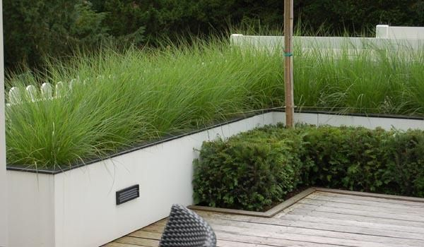 white rendered low garden wall, grasses and box hedge