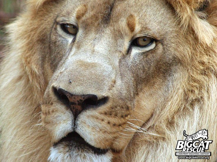Donate Unwanted Gift Cards to Save Big Cats! Your gift card donations are greatly appreciated! Donate them here: Nonprofitgiftcard.com/bcr