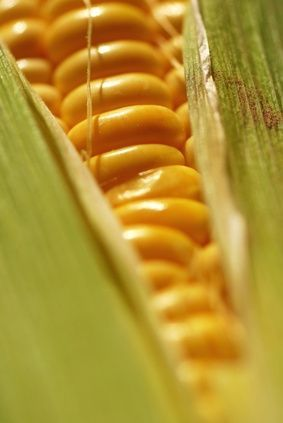How to Grill Corn in the Husk on a Gas Grill