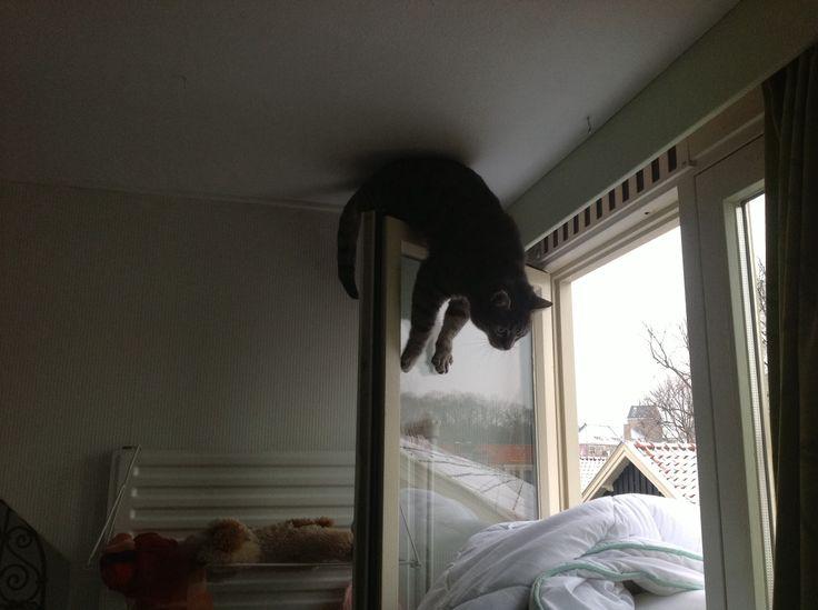 Ollie op het raam, mijn gekke kat