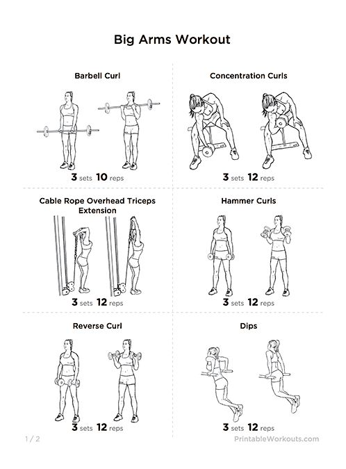 big arms workout  biceps  u0026 triceps exercises printable routine