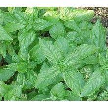 Lemon Basil Herb Seed