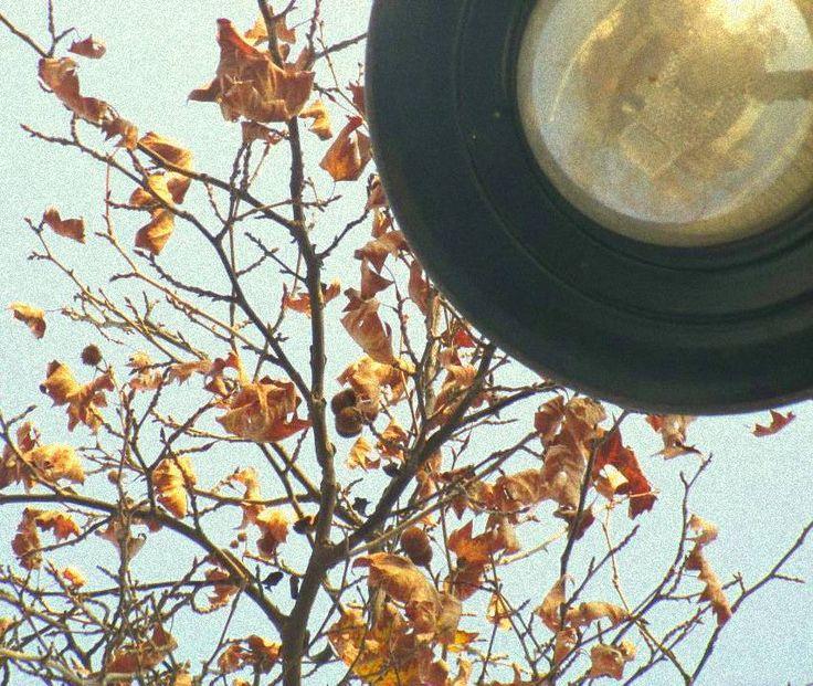Barrio Bellavista 2013 #stgo #chile #otoño #autumn #lights