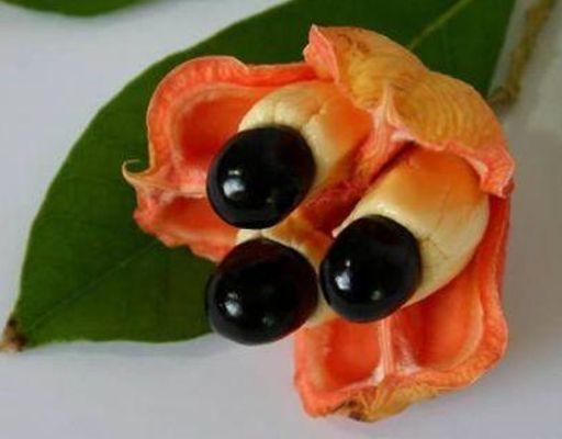 Ackee es la fruta nacional de Jamaica. El fruto fue importado a Jamaica desde África Occidental (probablemente en un barco de esclavos) antes de 1778. Desde entonces se ha vuelto una característica importante de varias cocinas Caribe, y también se cultiva en zonas tropicales y subtropicales otras partes del mundo. El fruto del seso vegetal no es comestible en su totalidad. Sólo los arilos interior, amarillo carnosos se consumen.