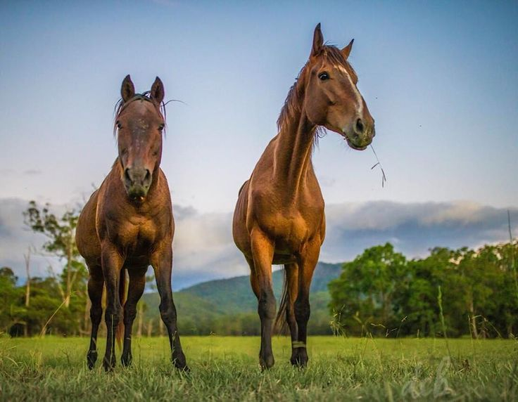 "The boys. ""Stormy"" and ""Icon"", our adopted ex-racehorses, taking in the quiet of the sunset on the farm. - Dr. Chris Brown"