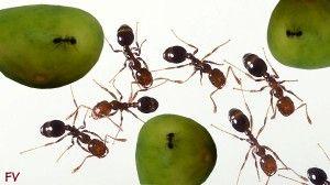 109 mejores im genes sobre fumigaciones en pinterest - Acabar con las termitas ...