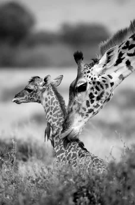 .black and white photo