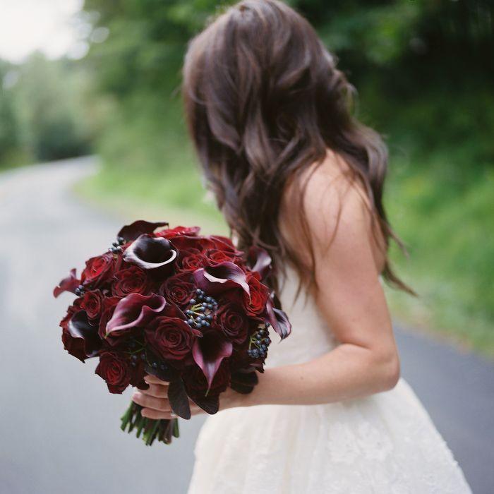 Black Baccara rose - Поиск в Google