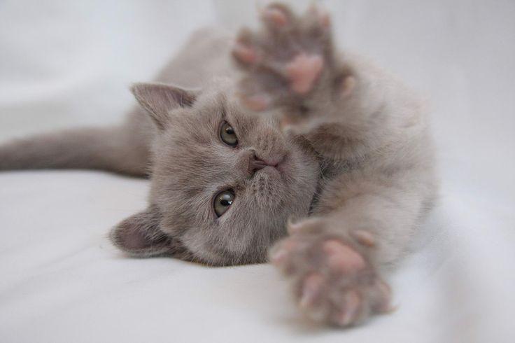 Картинки котя я скучаю
