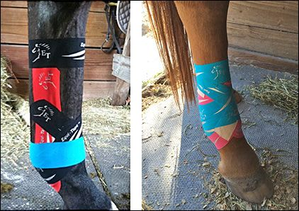 Equine Kinesiology Taping Horse Life ♡♡ Pinterest