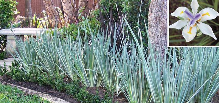 architectural plants for small gardens australia - Google Search
