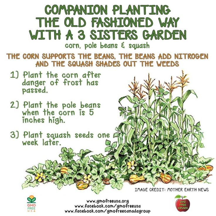 Best 25+ Companion Planting Ideas On Pinterest | Companion