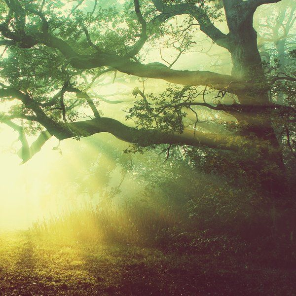 """""""But the trees seemed to know me. They whispered among themselves and beckoned me nearer."""" ― Ruskin Bond, Rusty"""