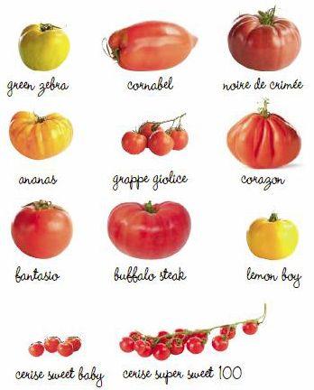 17 meilleures images propos de jaridinage sur pinterest - Quand planter les tomates cerises ...