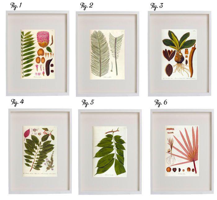 6 Free Downloadable Botanical Prints