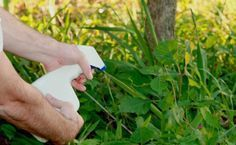 Добрый день всем! Хочу рассказать, как я борюсь с сорняками у себя на садовых дорожках и между клумб с цветами.  Много лет назад, когда создавала свой цветник, я использовала пленку между клумбами: ст…