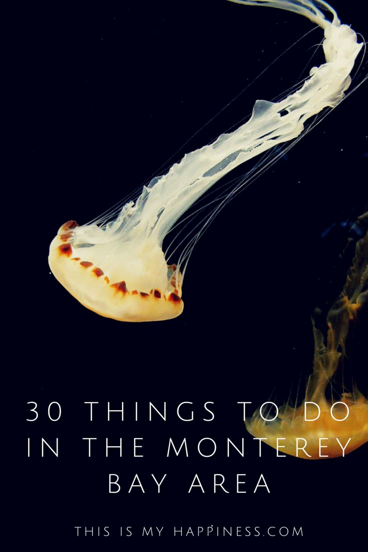 What to do, where to stay, where to eat & taste wine, + where to take kids in the Monterey Bay Area of Central California.