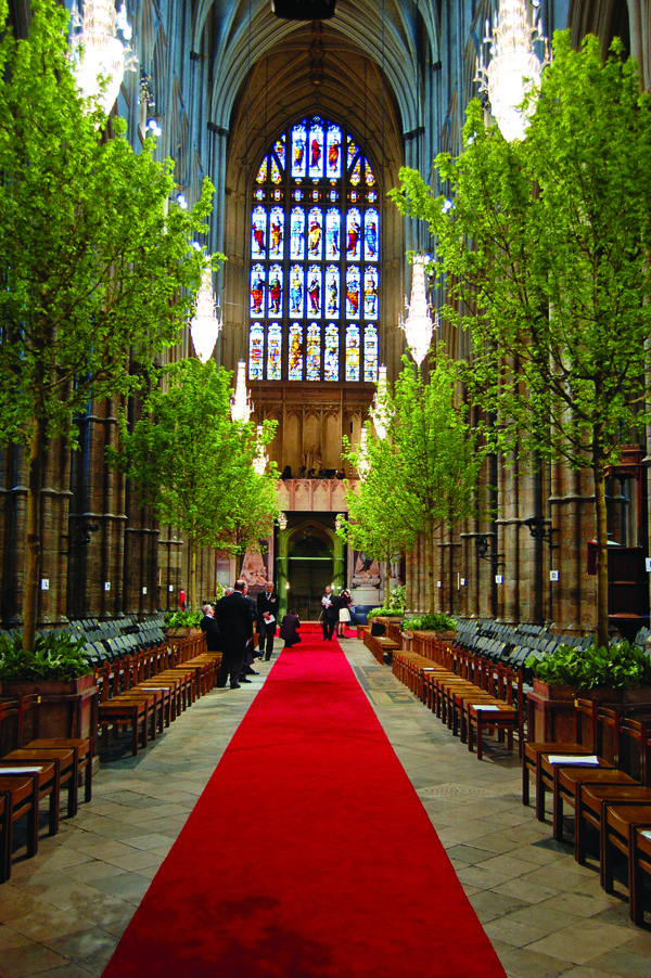 Majestic hornbeam and field maple trees flanked the long aisle of Westminster Abbey for the wedding of Their Royal Highnesses, The Duke and Duchess of Cambridge. True to Connolly's commitment to sustainability, the trees were later replanted in the National Memorial Arboretum. (Photo Courtesy of Shane Connolly LLP) source http://www.flowermag.com/article/the-flower-maestro/