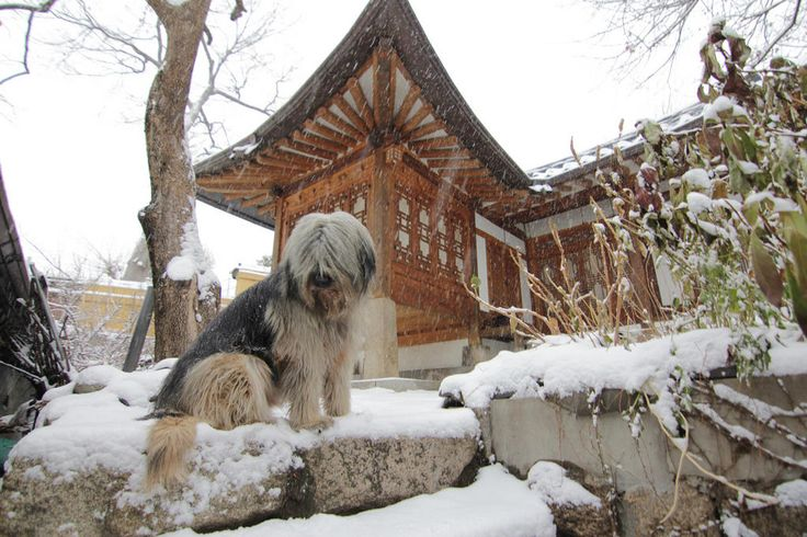 http://kozaza.com/seoulguesthouse