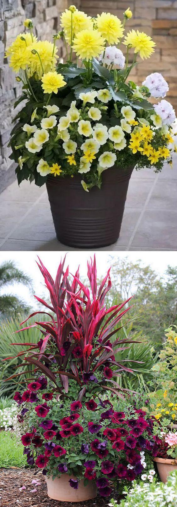 7 best garden wish list perennial hibiscus images on for Perennial container garden designs