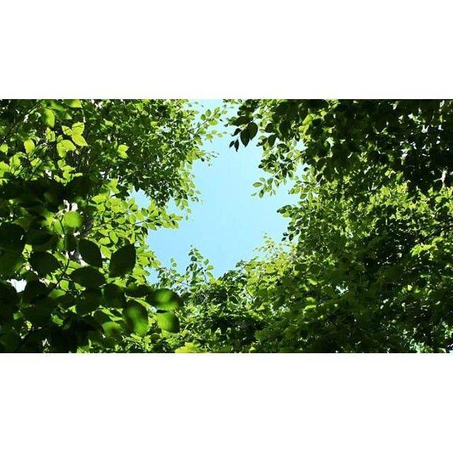【soraironooka】さんのInstagramをピンしています。 《日本は豊かな森の国、森の恵みを生かしながら、次の世代へ継承してゆく…明日へつながる森づくり、これからも大切に🌱 木洩れ日がここちよいほどに生長した、広葉樹の森から、空を見上げて🌿 #風景 #空 #森 #木 #緑 #長野旅 #信州小諸 #そらいろの丘》