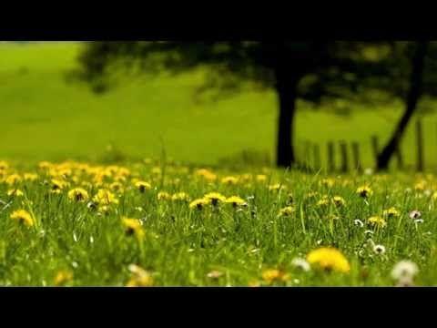 Light Background Guitar Music - study, think, yoga, meditation - YouTube