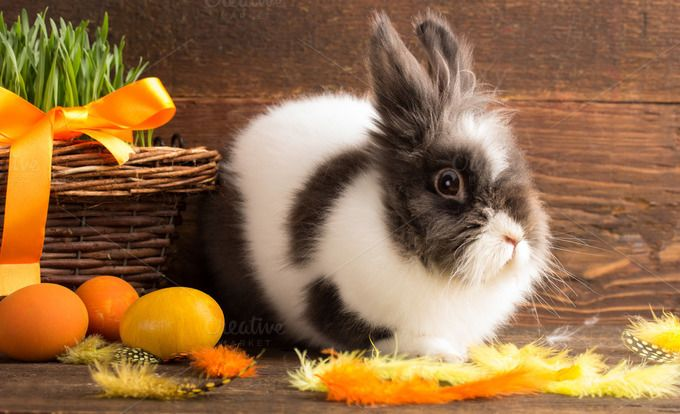 easter bunny by peterzsuzsa on @creativemarket