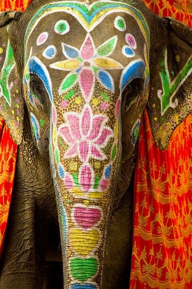 This is how he elephant would look (the one Sudasa would have to ride to her wedding).
