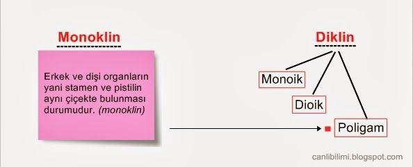Monoklin, Diklin, Monoik, Dioik ve Poligam kavramlarıyla çiçekli bitkilerde eşey tayini