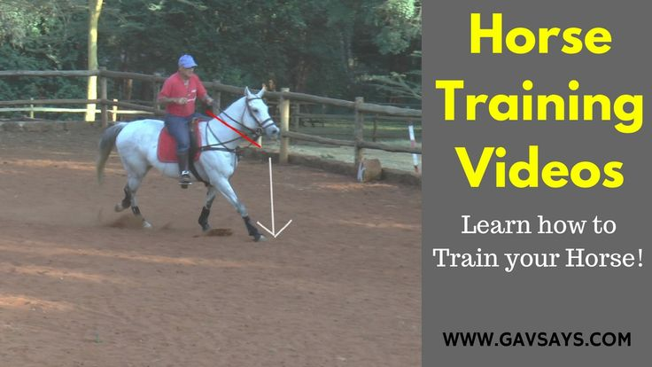 GavSays.com: Want to learn how to train your horse effectively? These horse training videos come from 45 years of training experience. Let's make your horse better...