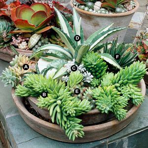 Succulent Container Garden Plans  Grow succulents in containers for easy-care color in any sunny, dry site.