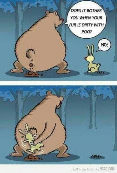 People say does a bear shit in the woods when someone is stating the obvious. A bear in the woods has the answer in this bear and rabbit joke