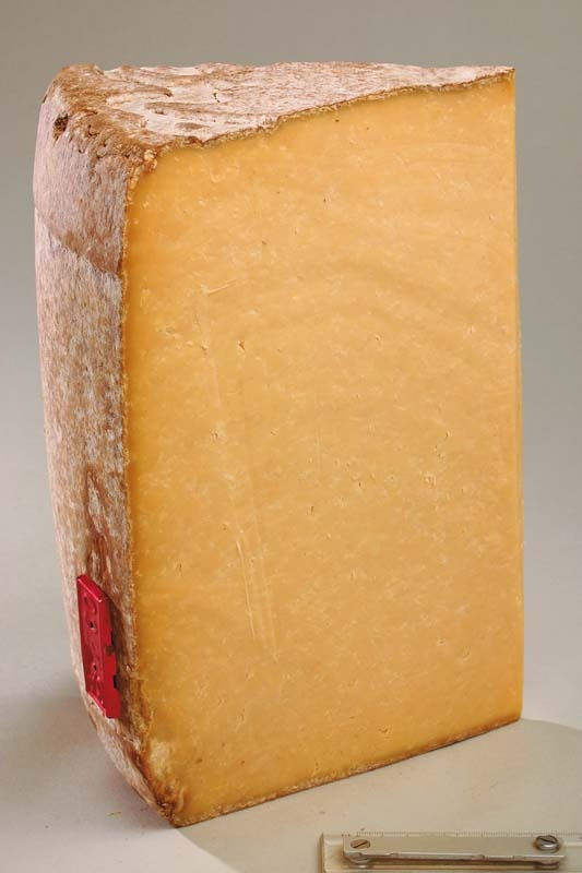 Salers French Cheese // region : Auvergne // milk : cow // (queso frances, fromage aop)