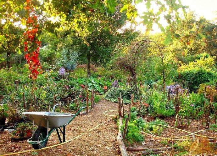 DIY Permaculture Garden Guide