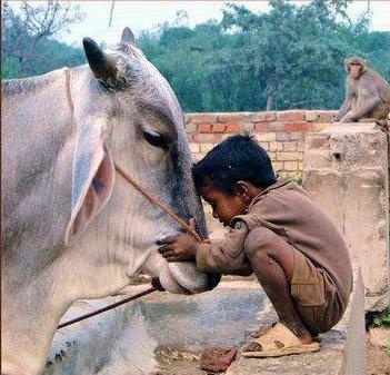 The essence of love is kindness.  ~Robert Louis Stevenson