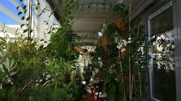 "En kinesisk balkong utöver det vanliga i ""Odla i P1"" - balkong planting plant balcony inglasad"