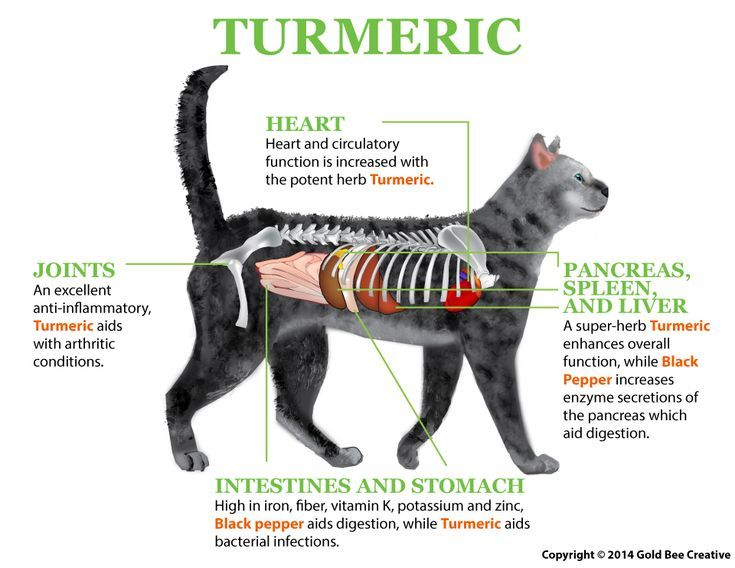 Turmeric For Cats Turmeric Cat Nutrition Chest Congestion