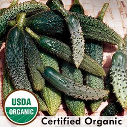 Heirloom Cucumber Seeds - Organic & Non-GMO Cucumber | Seed Savers Exchange