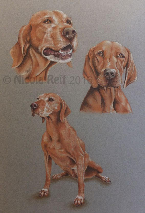 """""""Hunting Season"""" private commission. Pastel pencil on Pastel Paper. Artists own reference photos. Pet portraits"""
