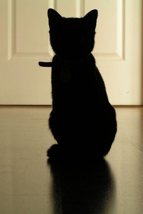 love my black kitty cat