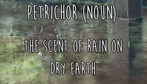 Petrichor - the scent of rain on dry earth