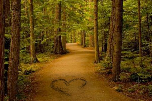 """"""" Love ....   makes his sign, and by no  other road  enters ....  and takes  possessions   .... of the heart. """"   - Jami <3"""
