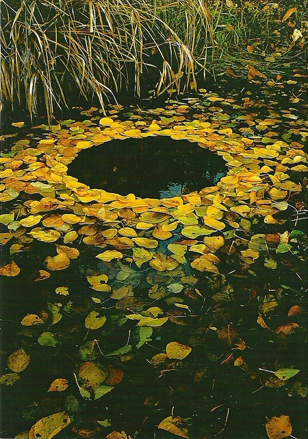 Yellow Leaf Circle ~ By mrsris at flickr